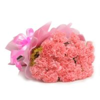 15_pink_carnations_151_27512
