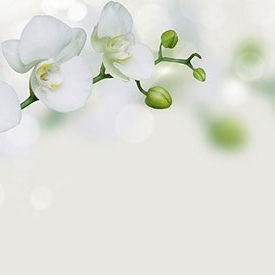 custom_orchid